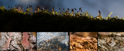 olivier gomez,photographe corse,vienne