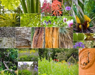 jardinplantesmontpblog.jpg
