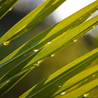 Plante grasse blog.jpg