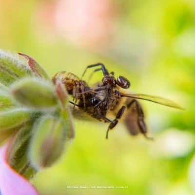 olivier gomez,photographe corse,jardin,nature,faune,flore,macro,photo,corse