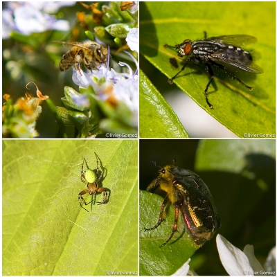 Insectoblog.jpg