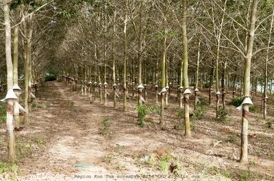 kon tum,environs,vietnam,olivier gomez