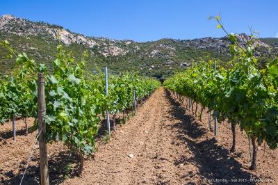 olivier gomez photographe corse vin corse clos culombu lumio