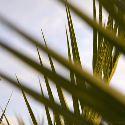 Plante grasse 2.jpg