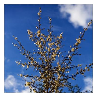 olivier gomez,photographe corse