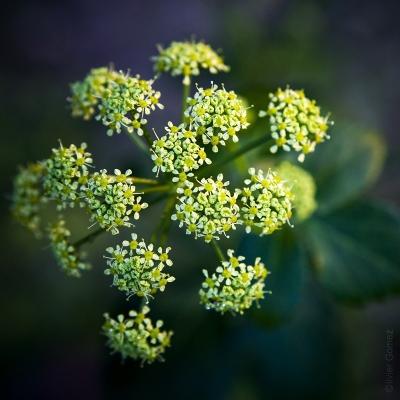 olivier gomez,photographe corse,printemps