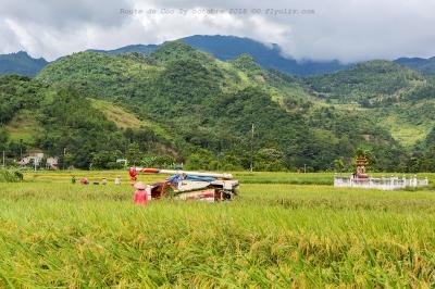 voyage,rizieres,route,coc ly,vietnam,olivier gomez,photographe corse